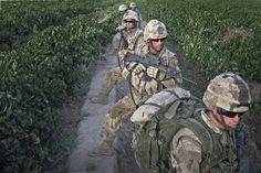 100 Images de l'Afghanistan - Jour 42. Les soldats de la Compagnie A, 1er peloton, 1er bataillon du Princess Patricia's Canadian Light Infantry des Forces canadiennes, effectuent des recherches aux alentours du district de Zjarey à l'ouest de Kandahar, dans le cadre d'une opération de sécurité conjointe de l'armée nationale afghane (ANA)/Coalition visant à chasser les forces talibanes de la région.