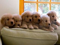 lots of golden goodness
