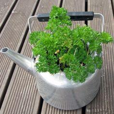 Persilja Plants, Herbs