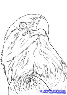 how to draw eagles, draw bald eagles step 22