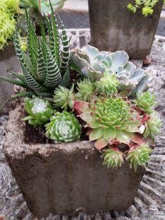 Cute Succulent Planters in Hypertufa