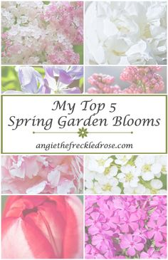My Top 5 Spring Garden Blooms   angiethefreckledrose.com