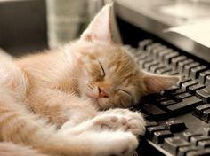 5 sitios para procrastinar... que son útiles
