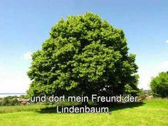 Hans Griffaton - Mein Elternhaus - YouTube Herbs, Fruit, Plants, Food, Marketing, Youtube, Birthday, Tree Structure, Musik