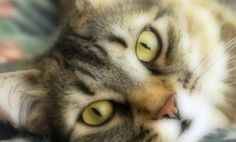 Prepare to Be Amazed: 7 Extraordinary Cat Facts