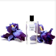 My Gandini Blue Musk  A bouquet of shining notes and the magic of a thousand different hues      The fruity start opens with notes of Coconut and Walnut accompanied by a bubbly touch of Blackcurrant. The central motif develops around the precious floral scent of Iris, Champac and Waterlilly. The woody-musk background of Cedar Wood and Musk is rounded off by fragrant Teak.