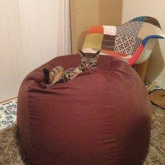 人をダメにするソファは猫をもダメにする。 | ねこっぷる