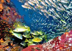 Подводный мир Мадагаскара