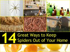 Perhaps you don't mind creepy-crawly things roaming around your home. But, if you're like most people, you want those critters gone! You may have several creative ways to get spiders out of your home but what about keeping them away in the first place? Use these tips to keep spiders from entering your humble abode. …