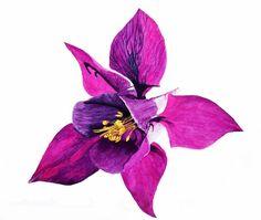 #columbine #flower #purple #beauty #art #watercolour #watercolor #painting #nature #brigitteklassenart