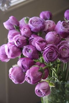Ranunculus // These Look Like Purple Peonies, Don't Know If They Are The Same Colour Bloom, My Flower, Pretty Flowers, Fresh Flowers, Cactus Flower, Spring Flowers, Rose Violette, Deco Floral, Purple Roses