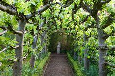 Espallier arbor. Pinned to Garden Design by Darin Bradbury.