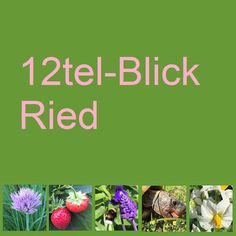 Winter, November, Edamame, Bern, Motto, Friday, Ground Cover Plants, Shade Perennials, Natural Garden