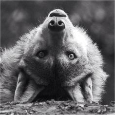 Wolf #wolf #love