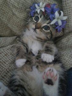 ✼ Кошка ✼ Cat ✼ Chat ✼ Gato ✼ 猫 ✼ Kitty with Flowers