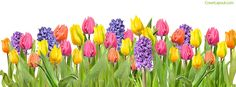 Spring Flowers Facebook Cover coverlayout.com