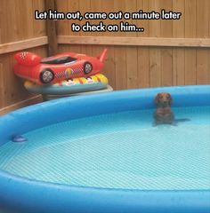 Dump A Day Funny Pictures Of The Day - 103 Pics. this would be dogs in Phoenix right here...you let me out, i'm getting in the pool. funny dog chilling in the pool
