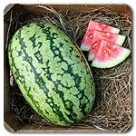 Organic Klondike Blue Ribbon Watermelon