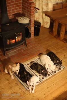 French Bulldogs by the Fire, from natsuhiko.