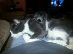 A kitty pillow