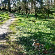 Spring is all in the air... #travel #travelblogger #travelstagram #klepp #Norwegiannature #norway #regionrogaland #jæren by travellingmunk