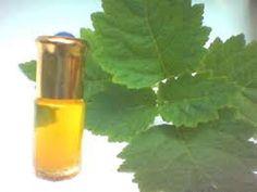 In een vorig artikel beloofden we nog uitgebreider in te gaan op de gezondheidsvoordelen van patchouli olie. Patchouli olie -effectief bij gisten, schimmels en ontstekingen- is familie van onder an…