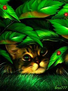 Котик спрятался - анимация на телефон №1251517