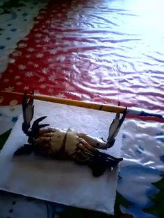 Crab gets PUMPED UP! (gif) http://i.imgur.com/kU3chMe.gif