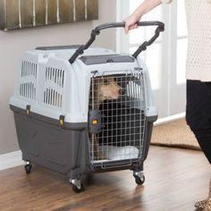 Skudo Plastic Sky Kennel by Midwest: IATA approved pet carrier Flying With Pets, Flying Dog, Airline Travel, Dog Travel, Travel Tips, Husky, Airline Pet Carrier, Diy Dog Crate, Cat Carrier