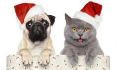 Dog and cat in red Christmas hat. Cat and dog in red Christmas hat on a white ba , Christmas Hat, Christmas Animals, Merry Christmas, Christmas Ecards, Christmas Kitten, Christmas Puppy, Nightmare Before Christmas, Cat Dog, Pet Safe