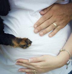 babybauchfotos-selber-machen-schwangerschaftsfotos-ideen-tipps-mit-hund-pfote