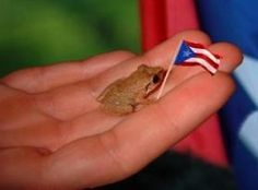 Our beautiful Coqui from Puerto Rico. Puerto Rico Food, San Juan Puerto Rico, Puerto Rican Dishes, Puerto Rican Recipes, Puerto Rican Culture, Enchanted Island, Thinking Day, Puerto Ricans, My Heritage