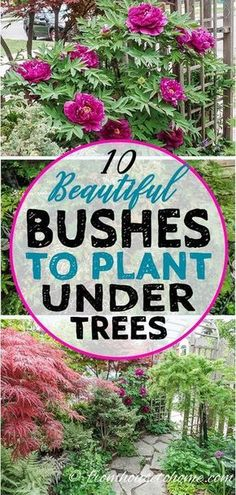Flower Garden Shade Shrubs: 10 Bushes to plant under trees - If you are looking for shade loving shrubs to fill the space between taller trees and low-growing perennials, this list of beautiful bushes will help. Garden Shrubs, Flowering Shrubs, Garden Trees, Shade Garden, Garden Plants, Garden Landscaping, Garden Bed, Backyard Shade, Landscaping Ideas