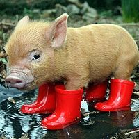 Piggy in red boots