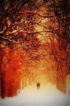 Snow , Bicyle , Norwey , Trees , way