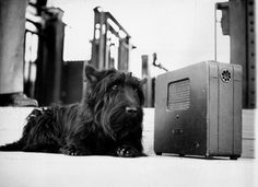 """Listening To His Master's Voice  On Sept. 23, 1944, during a speech to the International Brotherhood of Teamsters, Chauffeurs, Warehousemen and Helpers of America, President Franklin D. Roosevelt addressed a recent political attack against his dog, Fala. He defended his dog's honor by saying:    """"These Republican leaders have not been content with attacks on me, or my wife, or on my sons. No, not content with that, they now include my little dog, Fala. Well, of course, I don't resent…"""