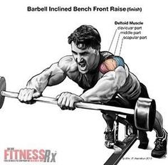 Shoulder / ПЛЕЧИ: Build Your Anterior Deltoids With Incline Bench Barbell Front Raises Fitness Gym, Muscle Fitness, Physical Fitness, Fitness Tips, Fitness Motivation, Weight Training Workouts, Gym Workout Tips, Fit Board Workouts, Workout Posters