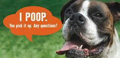 dog poop service - Google Search