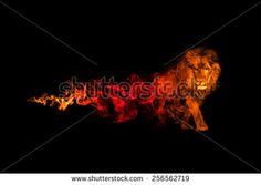 Animal Great Stock Photos, Images, & Pictures | Shutterstock