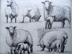 sheep1 Henry Moore