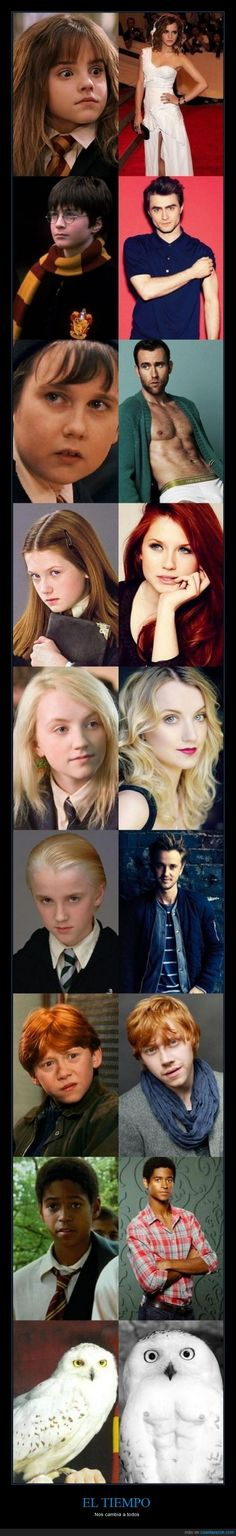 Funny pictures about Everyone In Harry Potter Has Changed. Oh, and cool pics about Everyone In Harry Potter Has Changed. Also, Everyone In Harry Potter Has Changed photos. Harry Potter World, Mundo Harry Potter, Theme Harry Potter, Harry Potter Jokes, Harry Potter Pictures, Harry Potter Cast, Harry Potter Universal, Harry Potter Fandom, Harry Potter Characters