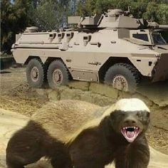 Defence Force, Armored Fighting Vehicle, War Machine, Cold War, Military Vehicles, South Africa, Army, African, Apartheid