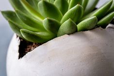 Large White Ceramic Planter for Succulent or Flowers