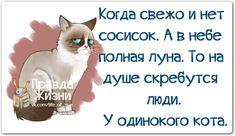 Прикольные фразочки в картинках №3156 » RadioNetPlus.ru развлекательный портал