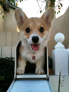 I would love it if this little cutie popped out of my mailbox!