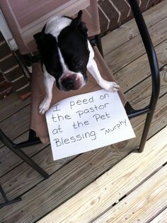 "I peed on the Pastor at the pet blessing -Murphy"" ~ Dog Shaming shame - that's not holy water!"