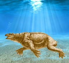 This artwork shows the desmostylian mammal Neoparadoxia cecilialina. Image credit: Doyle V. Trankina.