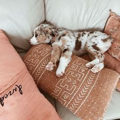 We need more Australian Shepard's in our life! See more on our FURRY AND FUZZY FRIENDS board! @ShopPriceless