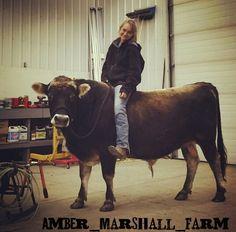 Cow back riding. Amber Marshall