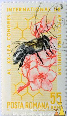 Western Honeybee, Romana, Romania, stamp, insect, bee, 55 Bani, Posta, 1965, Aida Tasgian, Constantinescu, Apis mellifera